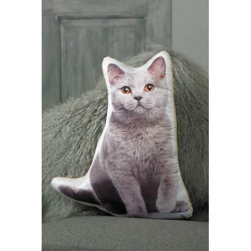 ASC-1026-British-Blue-Cat-lifestyle.jpg